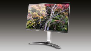 A monitor with a tree photograph on it