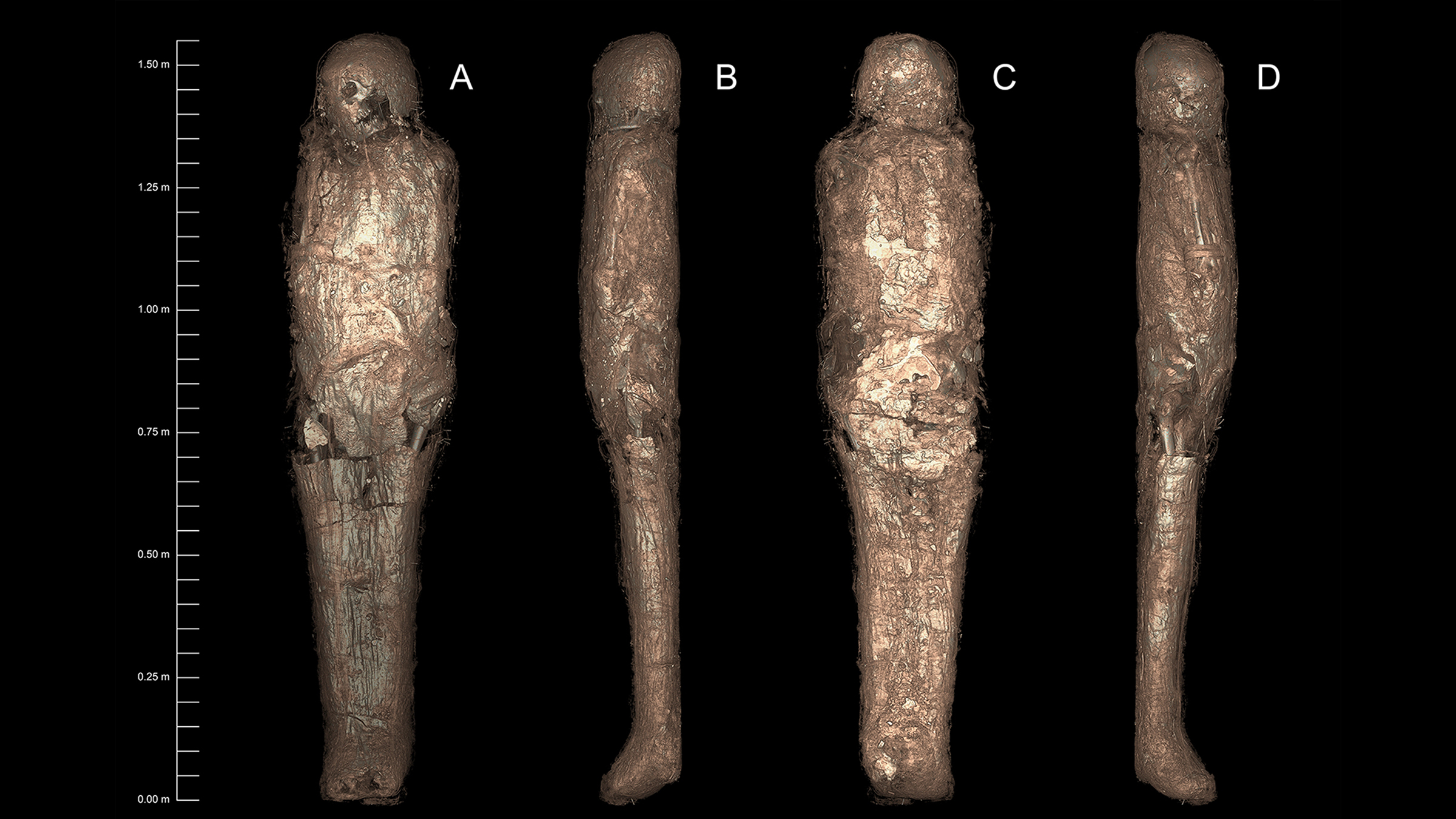 Here are 3D-rendered CT images of the mummified person, showing the mud carapace.