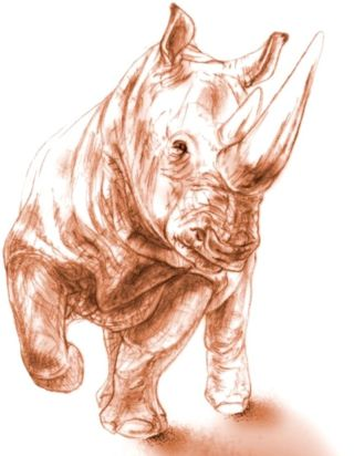 rhino fossils found preserved in volcanic ash.