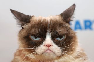 Grumpy Cat died at age 7.