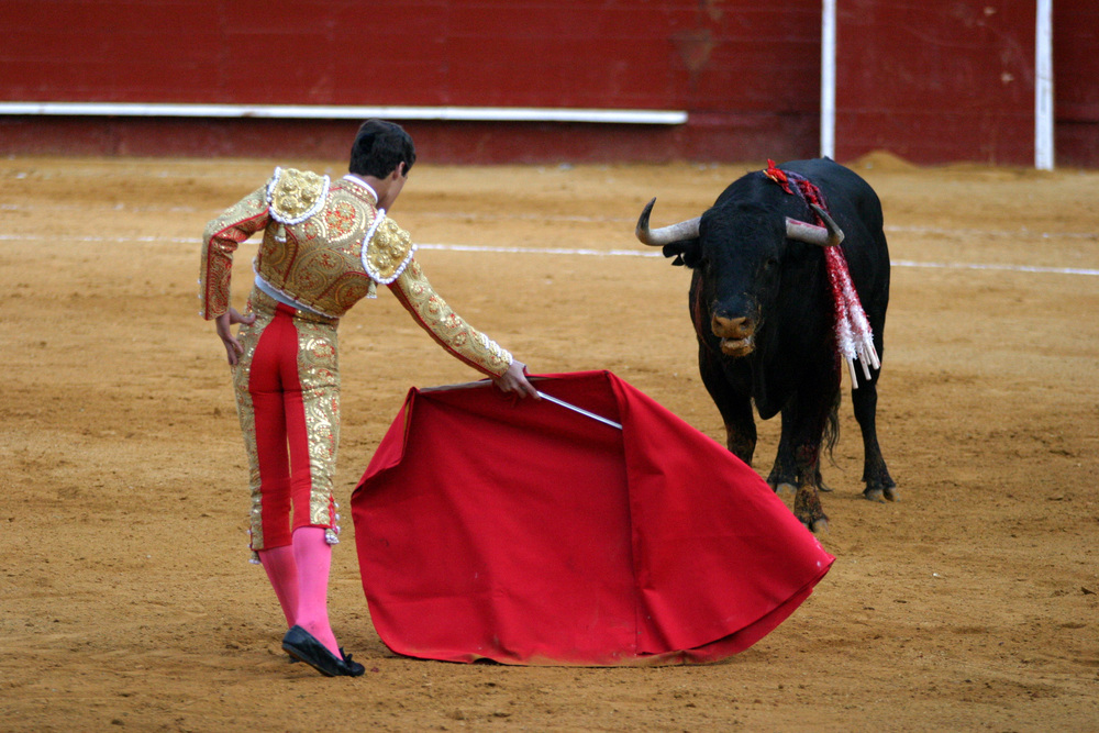 Why Do Bulls Charge When they See Red?   Live Science