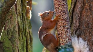 How to keep squirrels out of your bird feeder