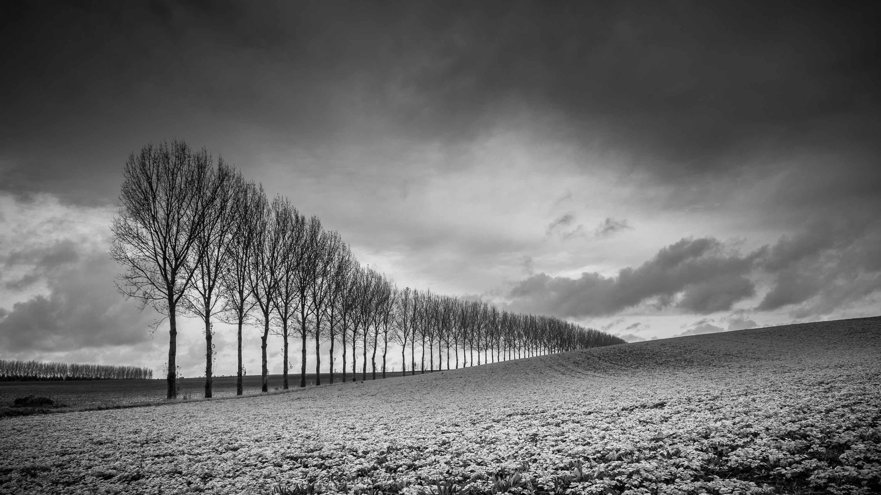 Black And White Photography With Digital Slr