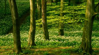 Incredible landscape composition tips: shoot natural patterns