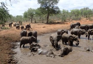 Elephants at a watering hole.