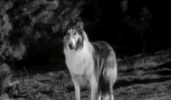 Lassie Dog Classic Television