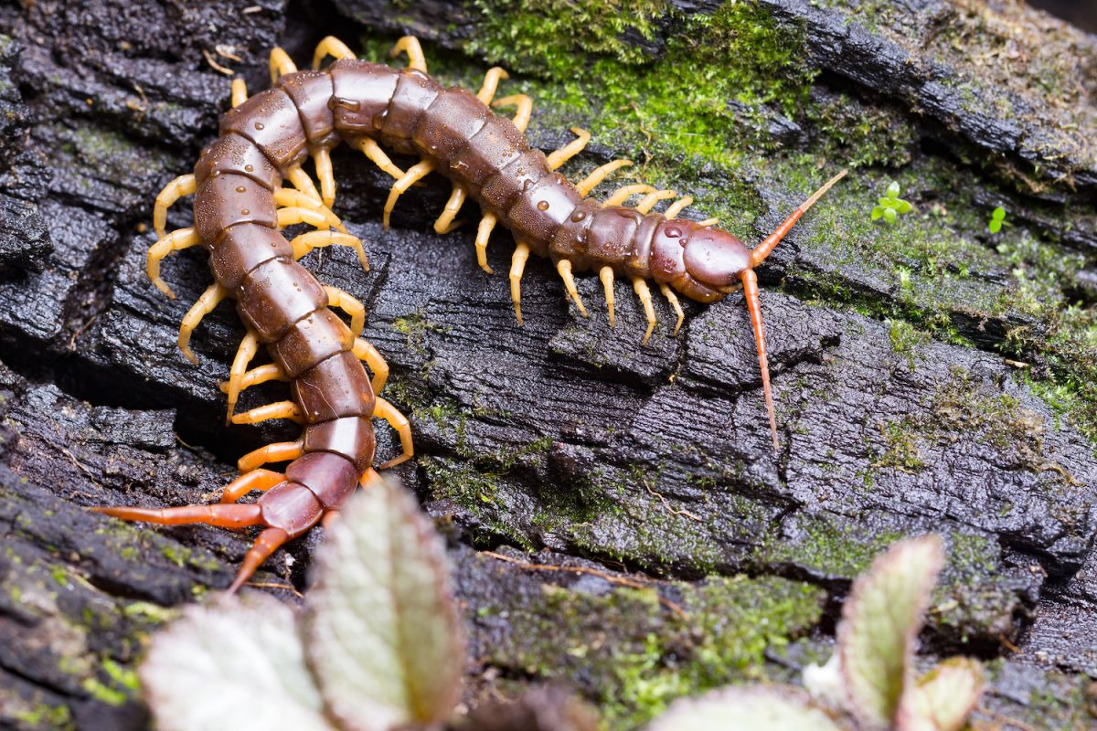 Centipedes and Millipedes: Lots of Legs, What's the