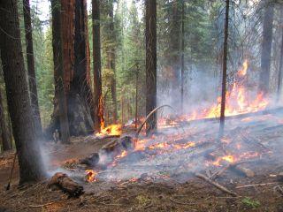 sequoia burn