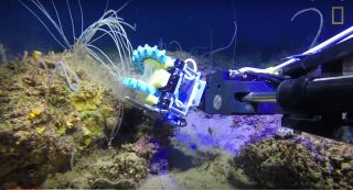 Squishy Fingers robot collects coral.