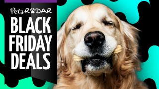chewy black friday deals
