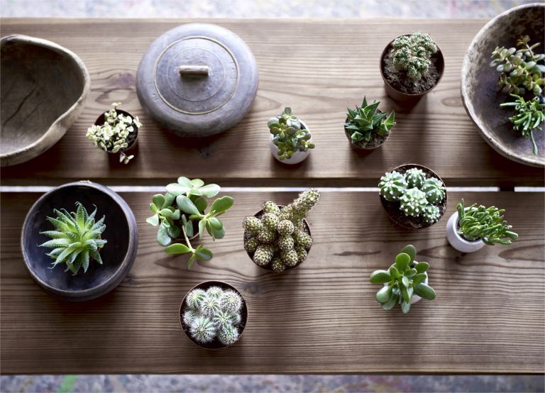 a crows eye view shot of various cacti and succulents on a coffee table