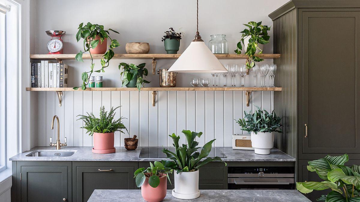Best winter house plants – 15 plants to grow inside