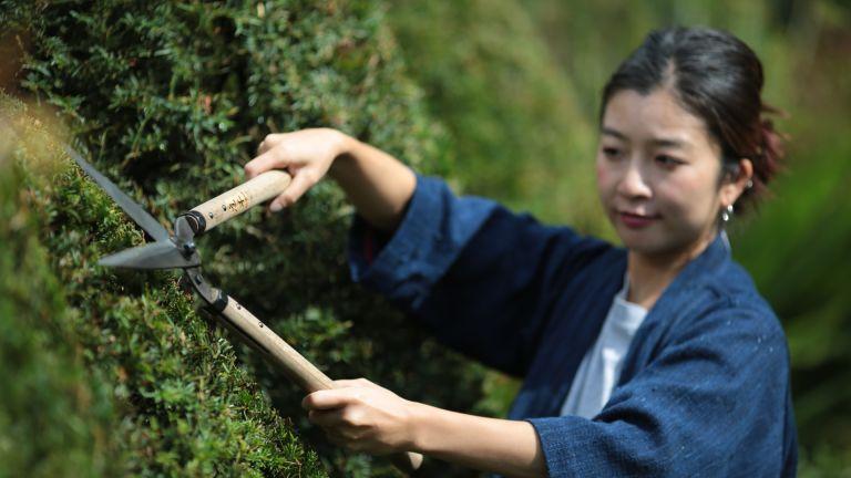 best garden tools: Niwaki Shears