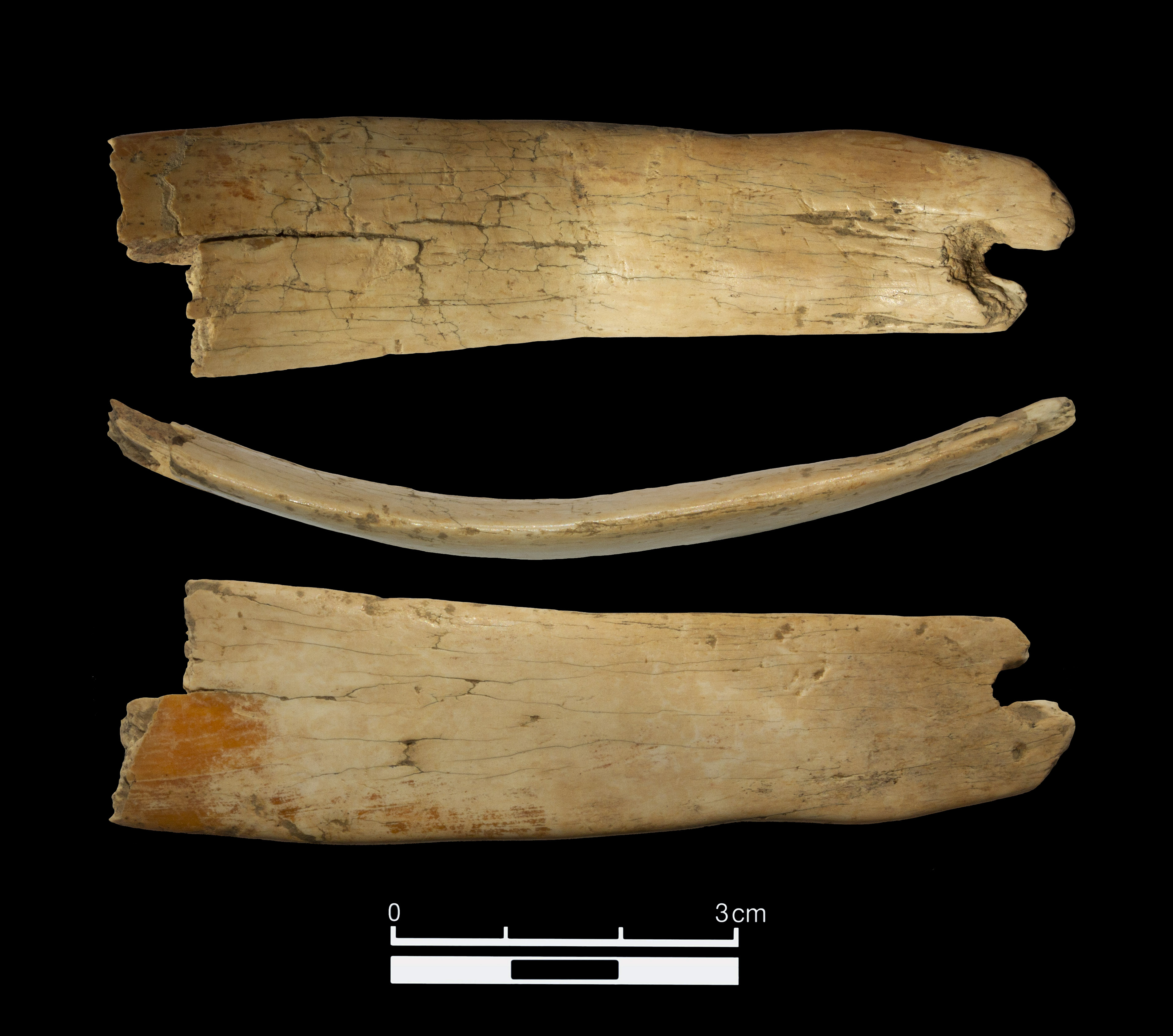 50,000-Year-Old Tiara Made from Woolly Mammoth Ivory Found