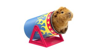 Best guinea pig accessories