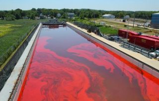 oil cleanup technology