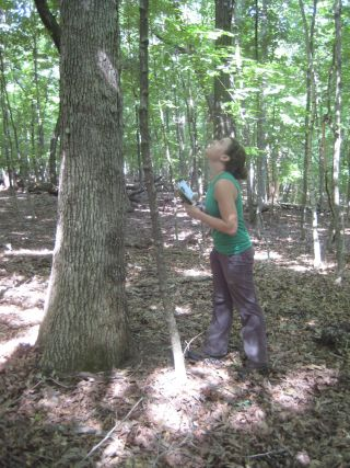 Caroline Farrior studies trees