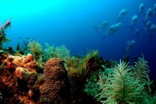 florida-coral-reef-110901-02
