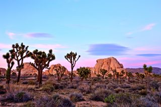 In 2015, for the first time, more than 2 million people visited Joshua Tree National Park in California.