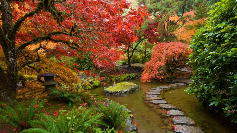 how to grow acers in Japanese-inspired garden with stepping stones across pond