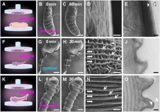 larva develop nano-suits to protect their bodies from radiation inside a vacuum.