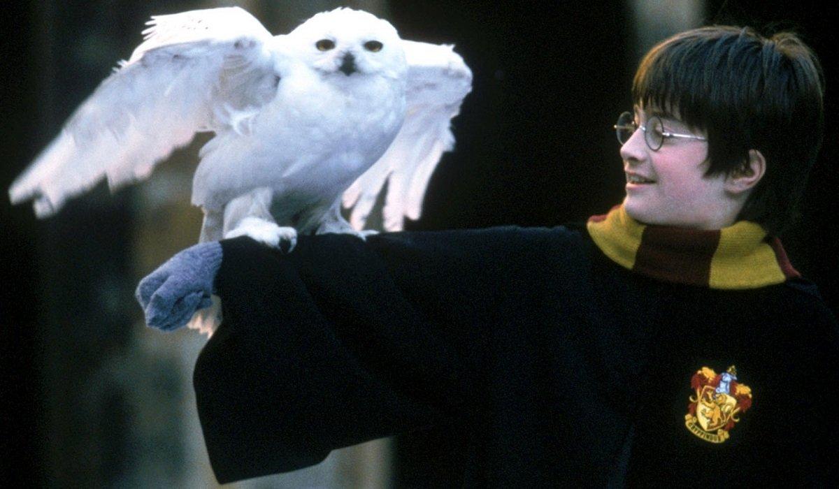 Hedwig Harry Potter