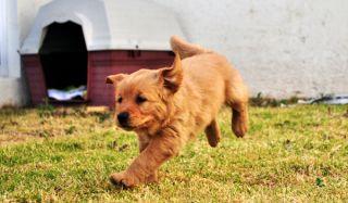 dog-running-110208-02