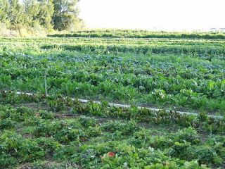 farm, farming
