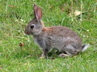 Rabbits: Habits, Diet & Other Facts | Live Science