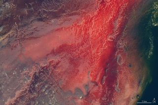 The crimson glow in Tanzania's Lake Natron, shown here in an image captured from the Landsat 8 satellite on Marck 6, 2017, is caused by salt-loving microbes called haloarchaea.