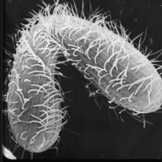 Single-cell Tetrahymena mate