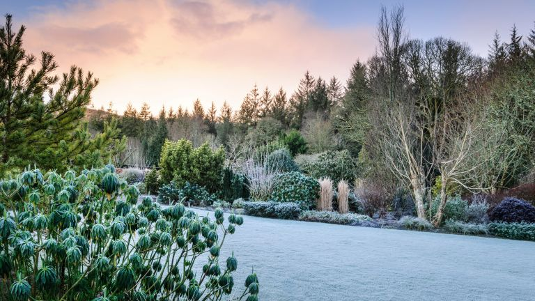winter garden jobs: RHS Rosemoor