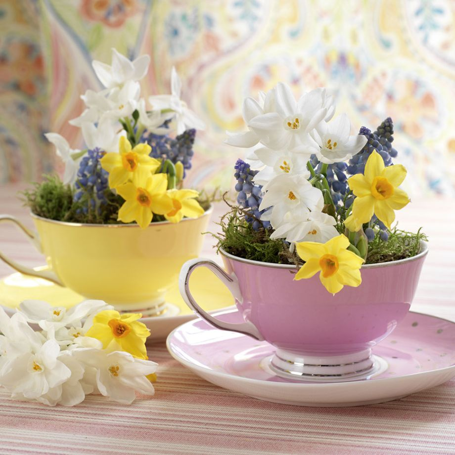 Flower cups photo