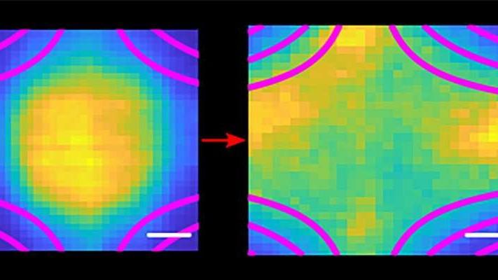 Plasma expands inside magnetic field