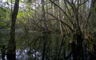 Big Cypress National Preserve in Florida national park service