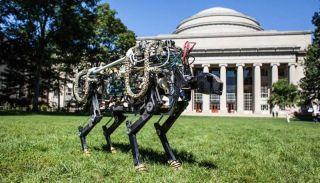 The robot cheetah.