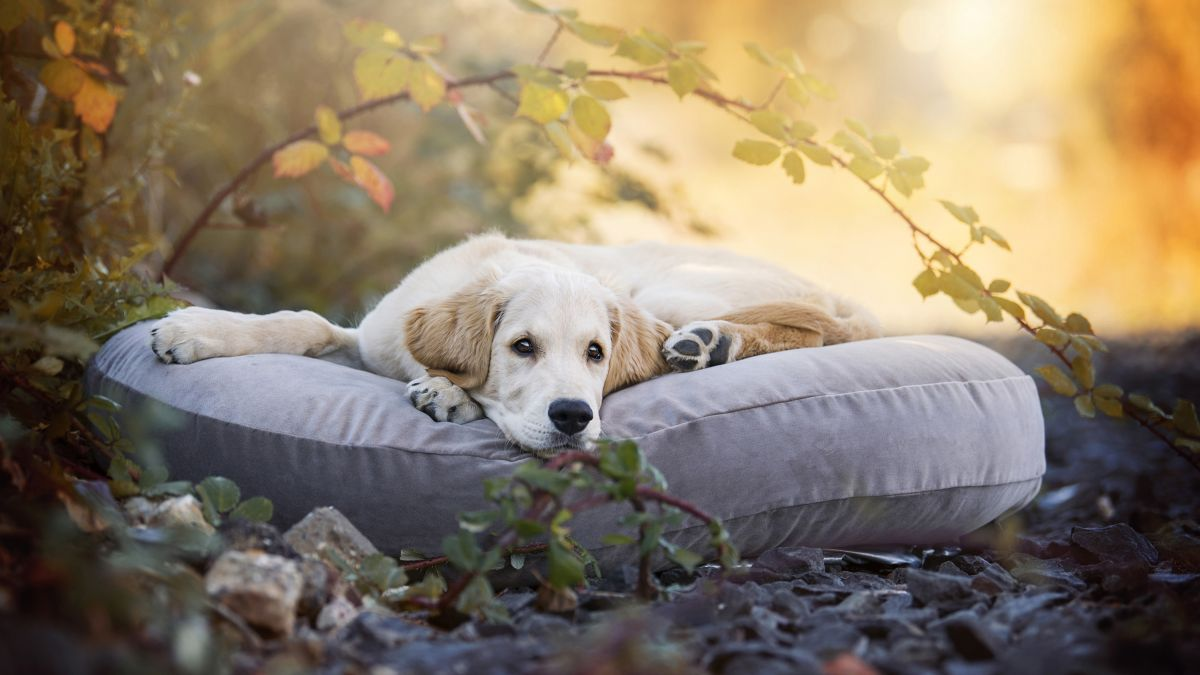 5 ways to get a dog-friendly space like Monty Don's garden