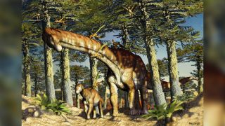 N. zapati would have grown to about 66 feet (20 meters) long and sported the column-like legs and long neck and tail of a typical titanosaur.