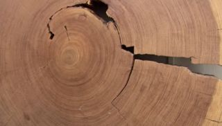 The density and width of tree rings shows how warm it was during each year's growing season, and trees thereby serve as a record of long-term climate trends.