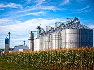 Corn dryer silos standing in a field of corn.