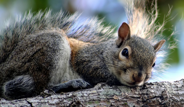 Why Do Squirrels Chase Each Other?   Live Science