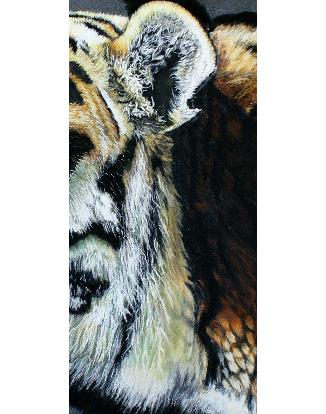 long fur close up of tiger painting