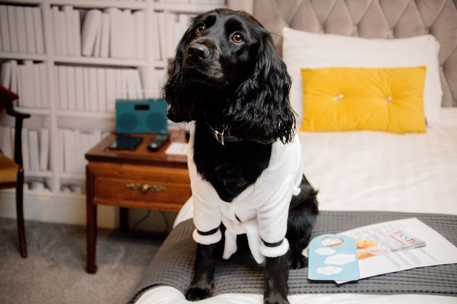 19 Of Britain's Best Dog Friendly Hotels
