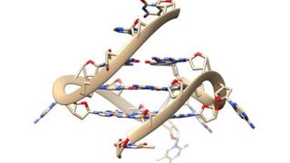 illustration of four-stranded DNA