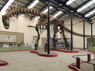 Argentinosaurus Dinosaur Skeleton