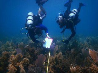 reef in the florida keys 2005