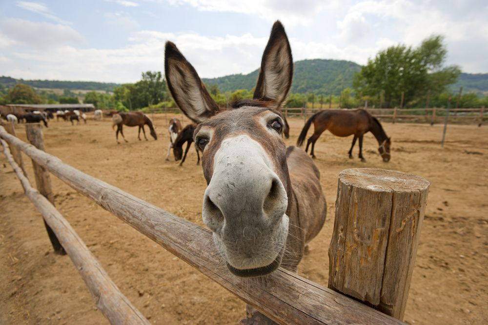 Facts About Donkeys | Live Science