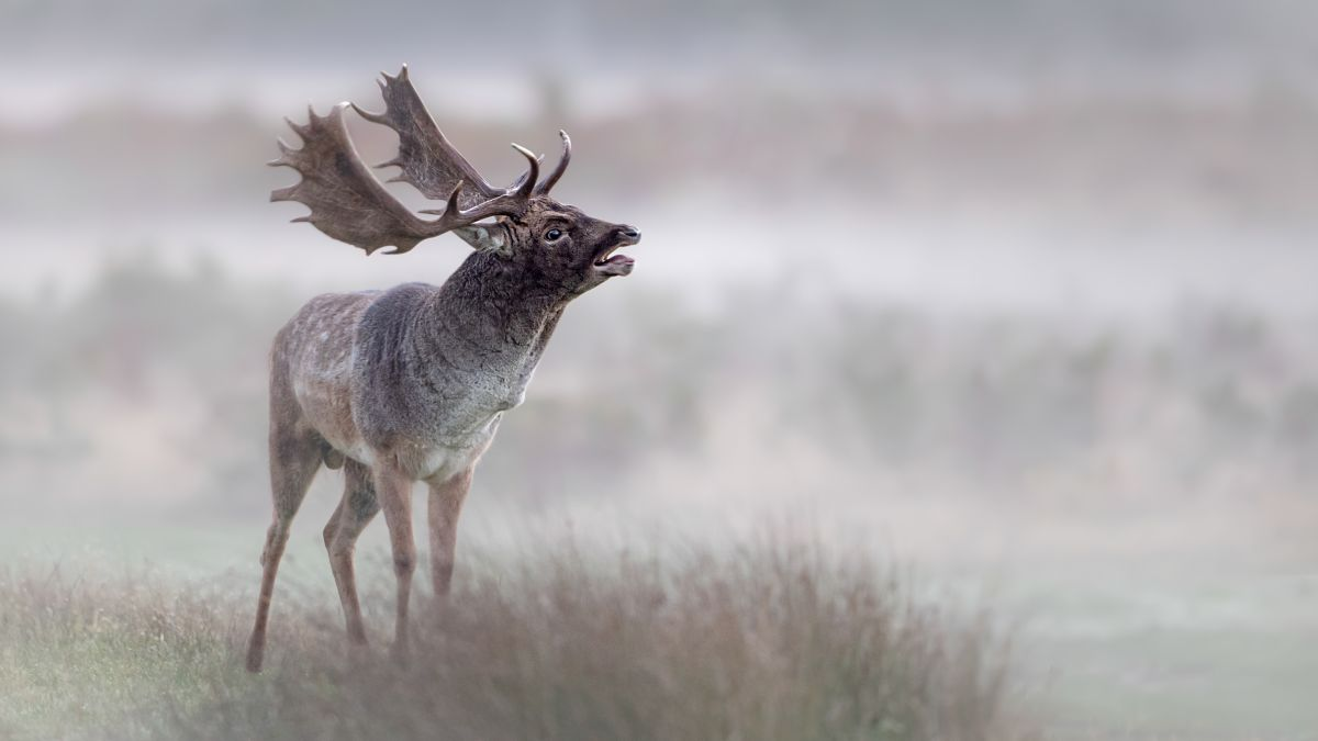 Are you ready to photograph wildlife this Autumn?