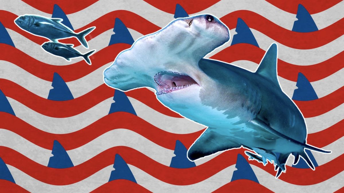 How to watch Shark Week 2020 online: TV schedule, where to stream and more
