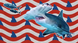 watch shark week 2020 live online